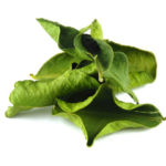Citroenblad - kaffir lime leaves - Thaise kruiden
